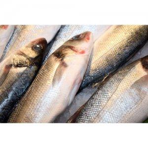 <p><strong>Сельдь мороженая<br />Hering congelat<br />Frozen&nbsp;herring</strong></p>