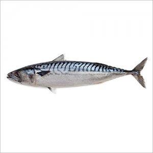 <p><strong>Скумбрия мороженая<br />Macrou congelat<br />Frozen&nbsp;mackerel</strong></p>